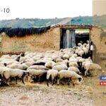 IV Domenica di Pasqua: SANTA MESSA in diretta YouTube dalla chiesa parrocchiale San Giovanni Battista a Orbassano